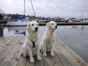 Orust So Reisen Sie sicher mit Ihrem Hund